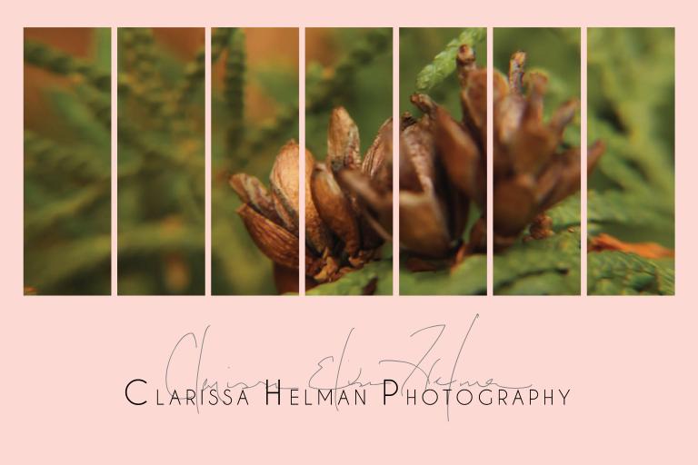 ClarissaHelmanTitlePage